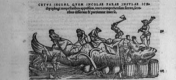 woodcat print of men stripping blubber from whale